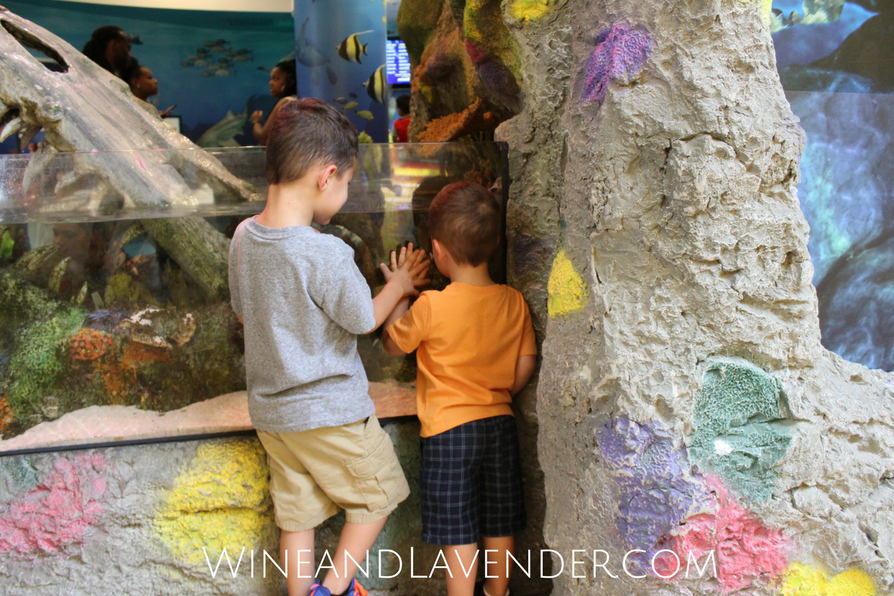 Here are 5 reasons to visit Sea Life Aquarium with kids!