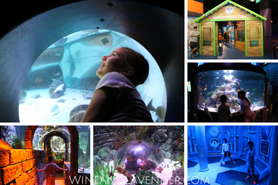 Here's a sneak peek of Sea Life Aquarium and 5 reasons why it's a great place to take kids!