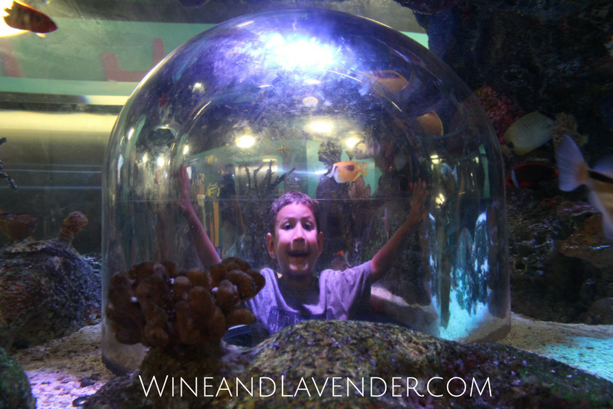Sea Life Aquarium in Grapevine, TX has a world of wonder to explore! If you're looking for a quick weekend getaway with kids or just fun with kids, you'll have to check them out. Here are 5 reasons why... Click here.